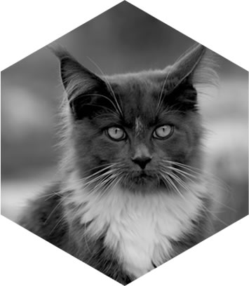 hexagon-cat.jpg